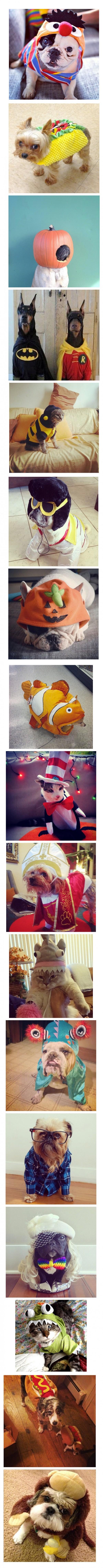 Mascotas listas para Halloween