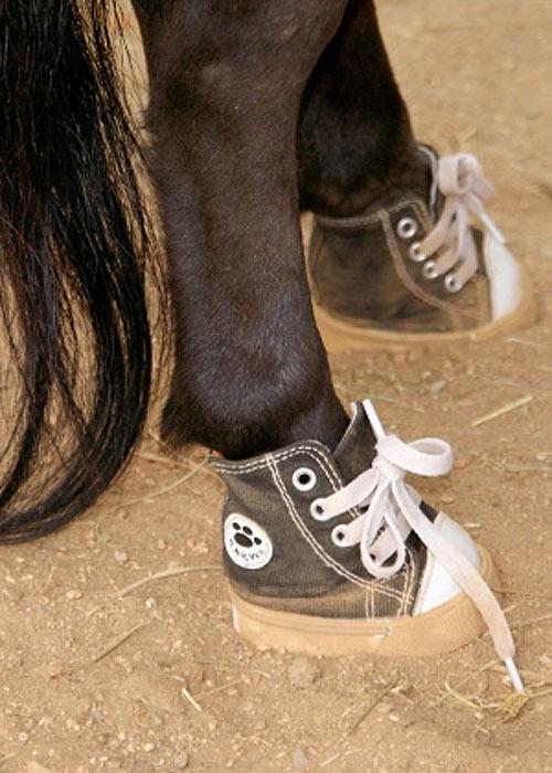 Mi caballo con zapatillas a la moda