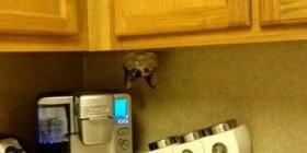 Mi gato es fan de Spiderman