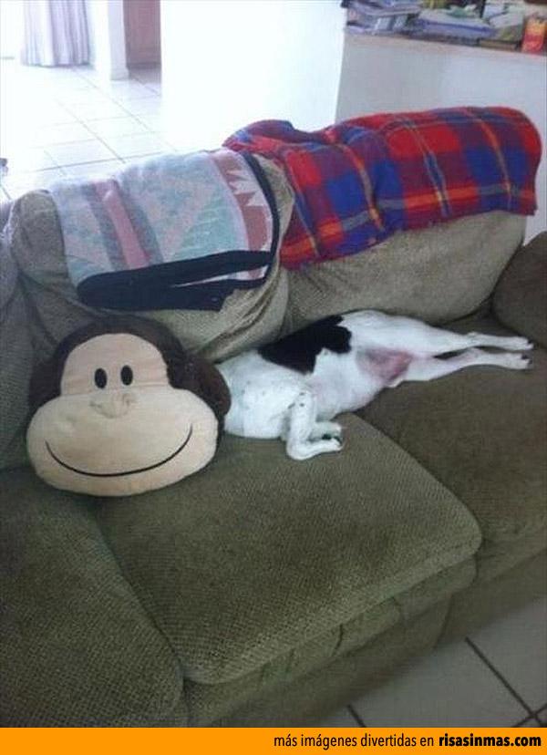 Mi perro es muy mono