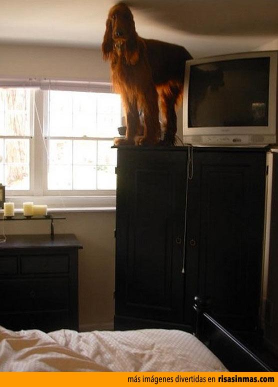Mi perro sobre el armario
