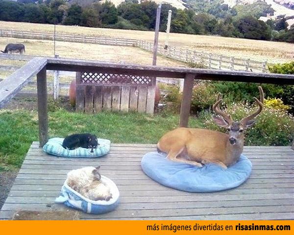 Mis mascotas descansando