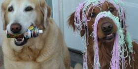 Mis perros de fiesta
