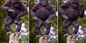 Mono bailarín