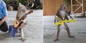 Mono fan de Guitar Hero
