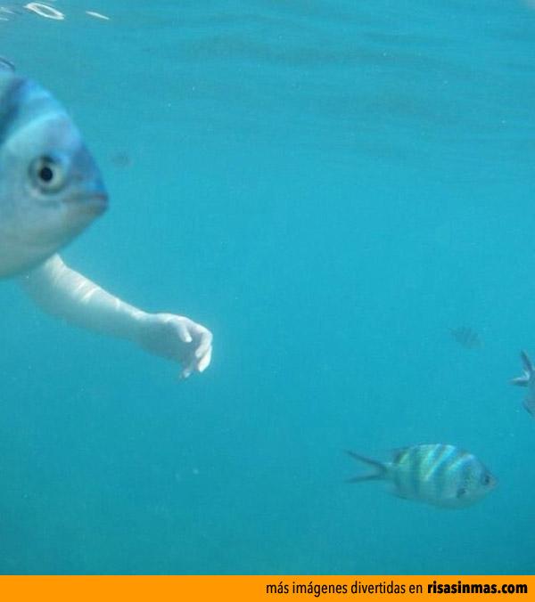 Nueva espacie de pez con brazos