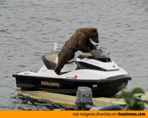 Osito en moto de agua