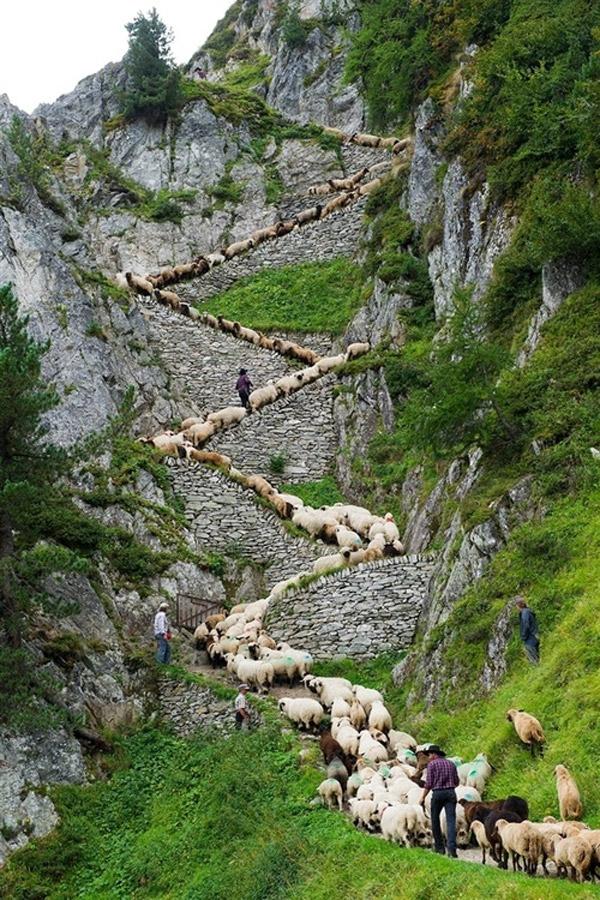 Pastorear en Suiza