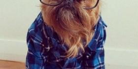 Perretes hipster, la moda de Internet