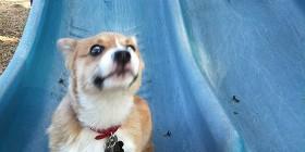 Perrito posando ante la cámara