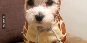 Perro disfrazado de jirafa