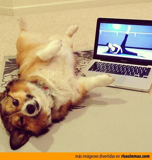 Perro haciendo aeróbic
