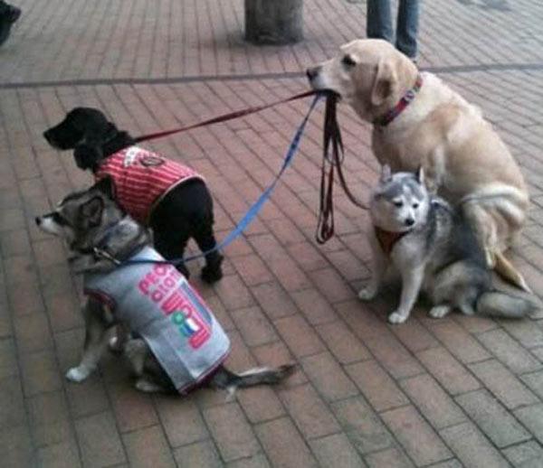 Perro sujetando a sus amigos