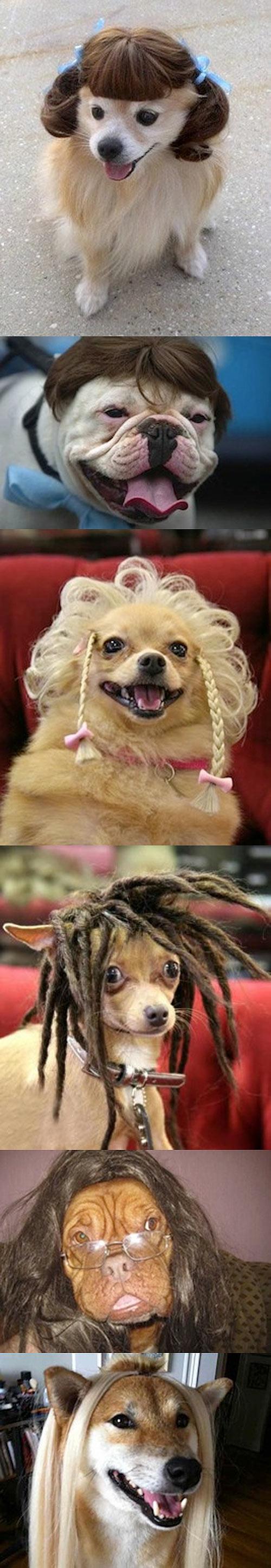 Perros con pelucas