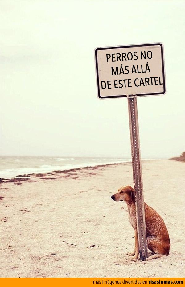 Perros no