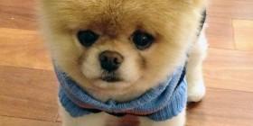 Perros peligrosos: VIII