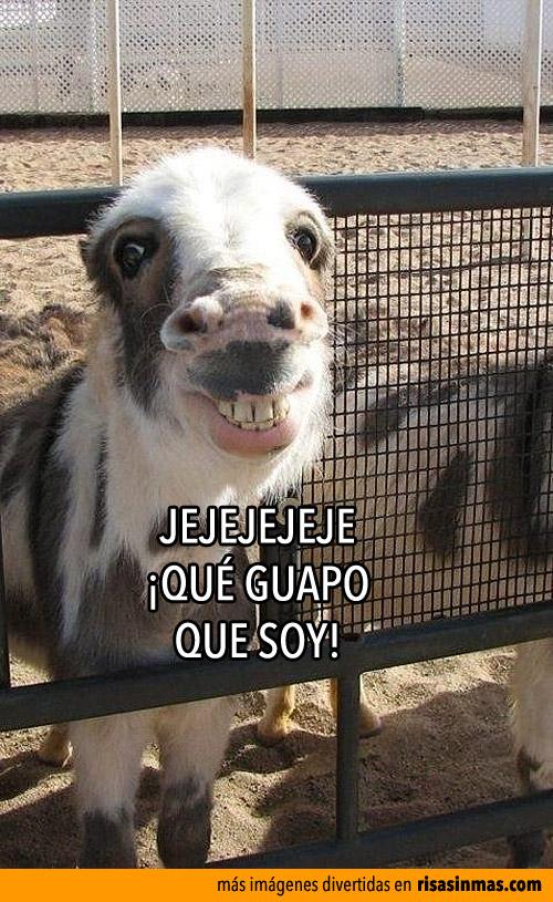 Poni sonriente