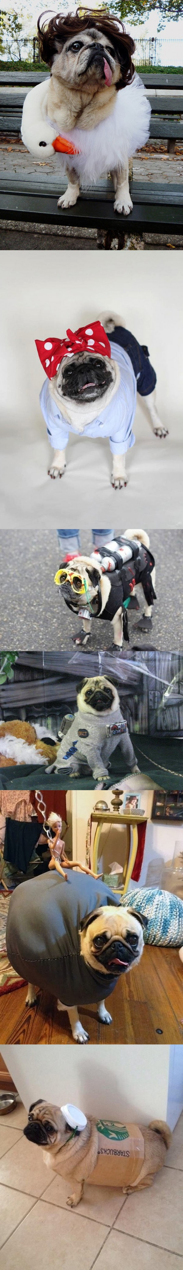 Pugs disfrazados