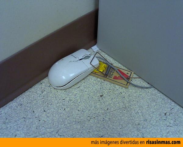 Ratón cazado