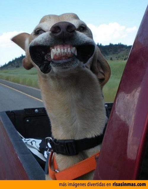 Sonrisa forzada