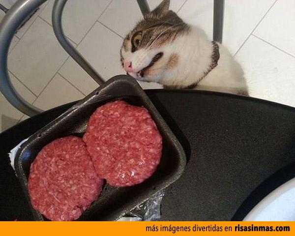 Tu gato cuando huele comida