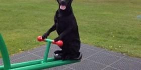Tu perro esperándote para jugar