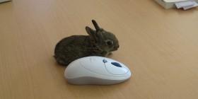 Un conejo y un ratón