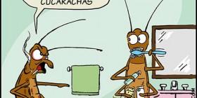 La vergüenza de las cucarachas