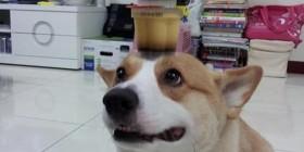 El perro malabarista