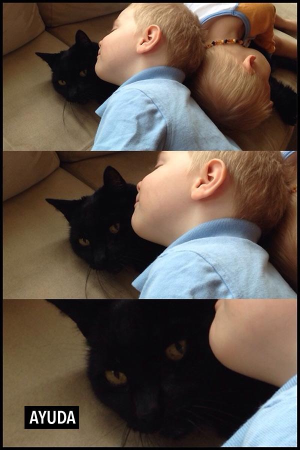 Un gato en apuros
