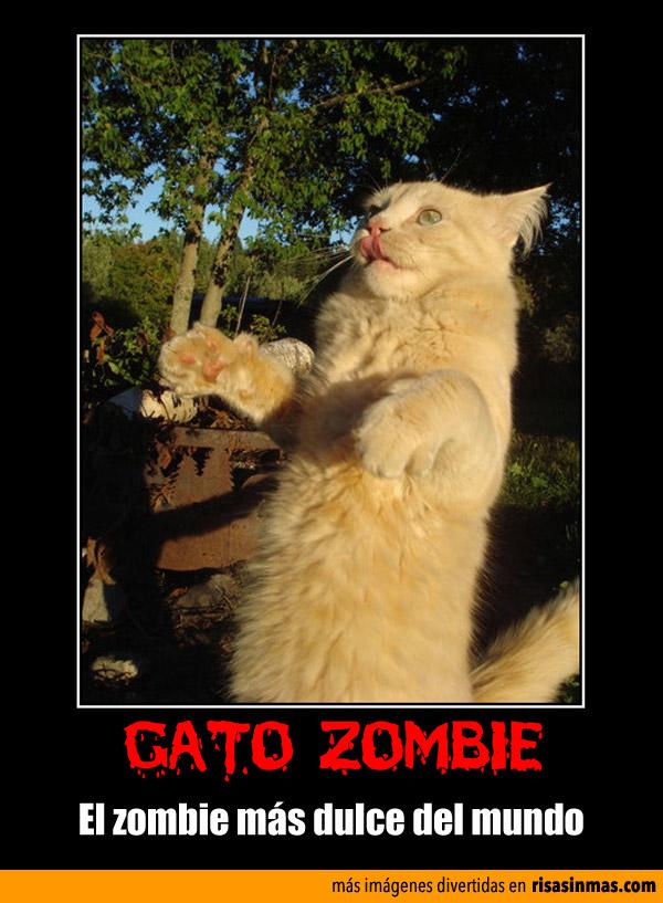 Gato zombie