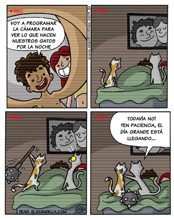 Lo que hacen los gatos de noche