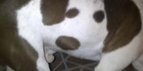 Mi perro tiene un perro dibujado