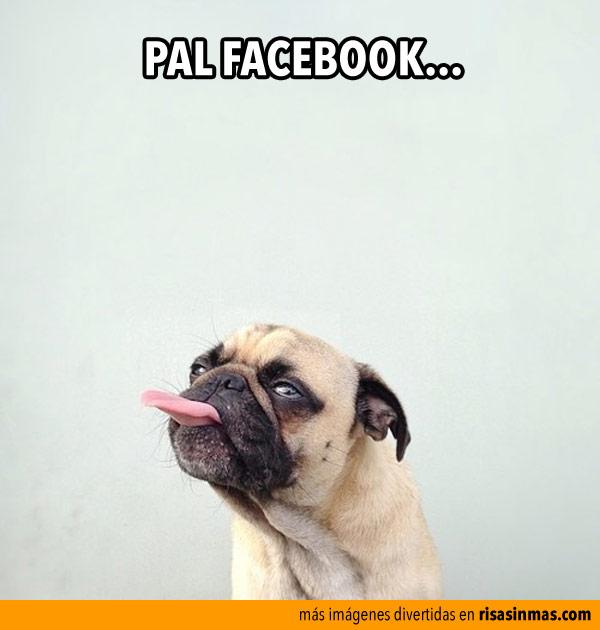 Pal Facebook