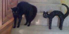 Parecidos razonables: Gato erizado