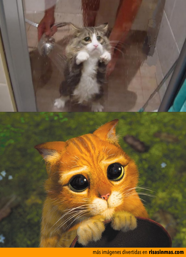 Parecidos razonables: Gato de Shrek