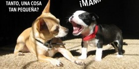 Perro gritando