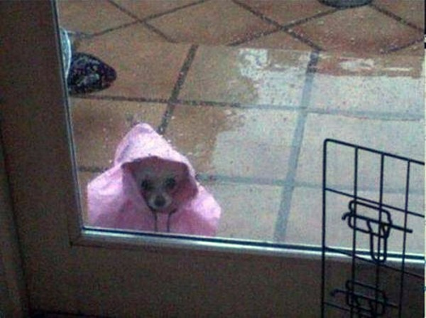 ¿Me dejáis entrar?
