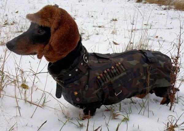 Perros entrenados por el ejército ruso
