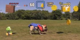 Super Pug Bros