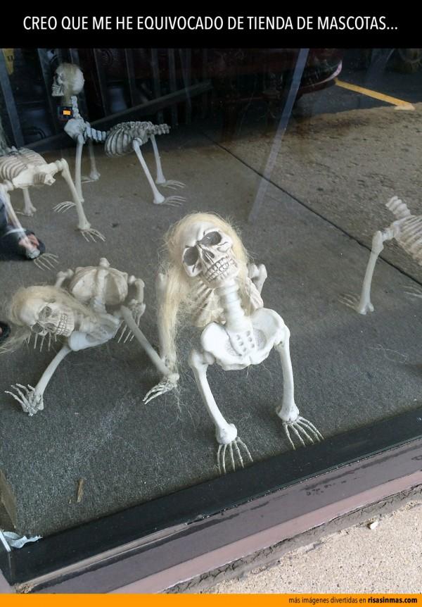 Me he equivocado de tienda de mascotas