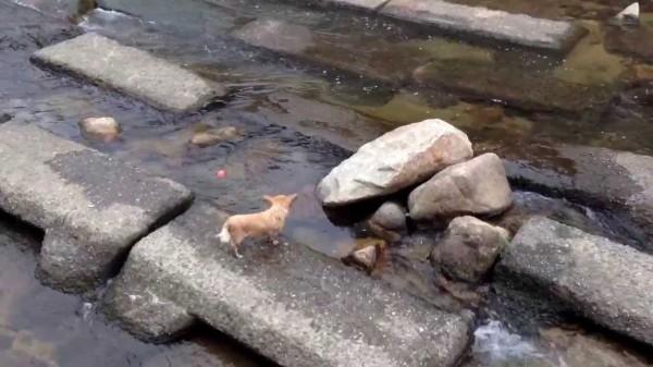 Un perro que no necesita amigos
