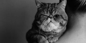 Qué dura es la vida de un gato