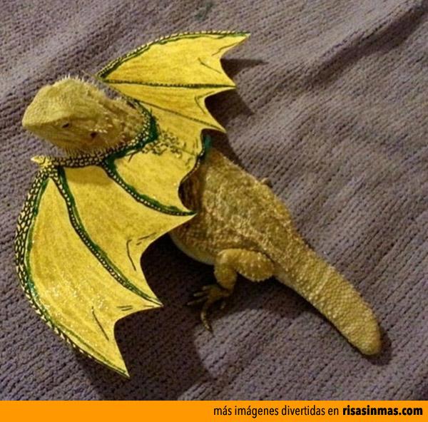 Capturan una cría de dragón