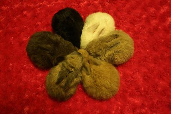 Conejos reunidos