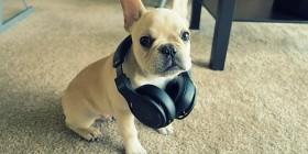 DJ perrete