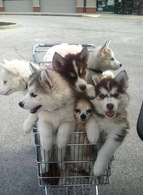 De compras con mis perros
