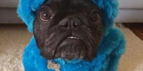 Disfraces de perros: Monstruo de las Galletas