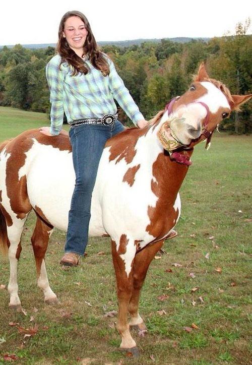 El caballo más simpático del mundo
