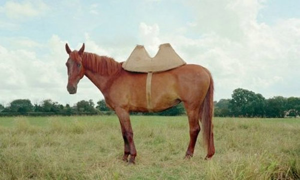 El caballo que quiere ser camello